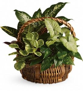 emerald-garden-basket-plants