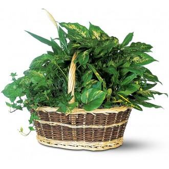 large-dish-garden-plants