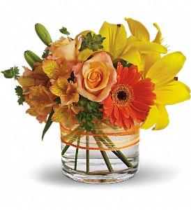 sunny-siesta-mix-flowers