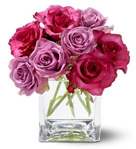 wild-plum-roses