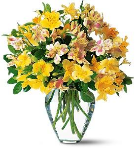 yellow-alstroemeria-vase